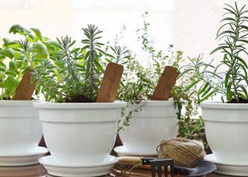 Cum poți cultiva acasă ierburile pentru mâncărurile cu pui